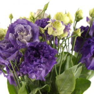 эустома кучерявая фиолетовая
