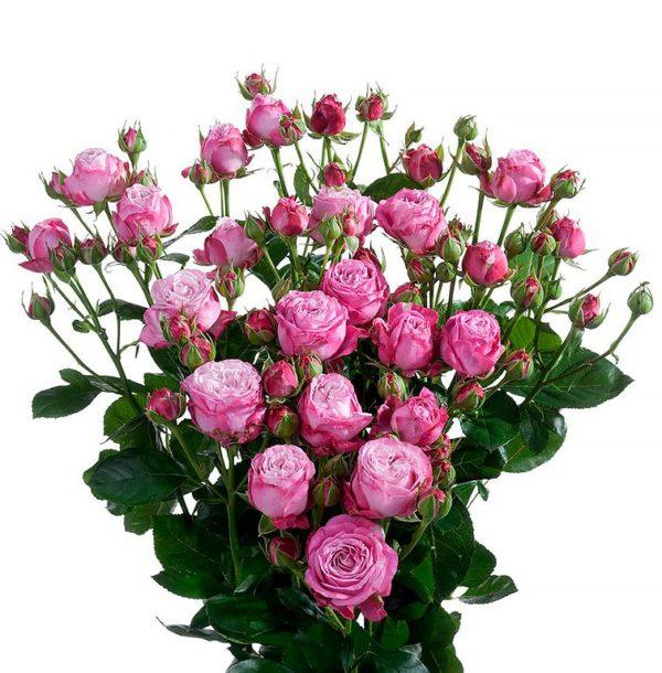Розы кустовые Леди Бомбастик
